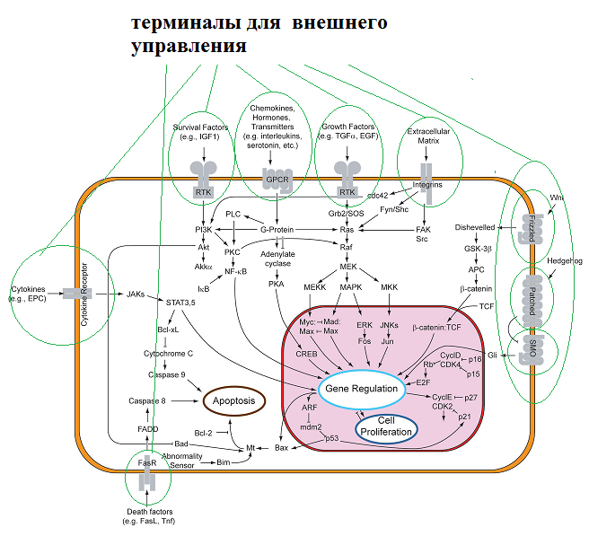 Signal_transduction_pathways_2019-03-16.png