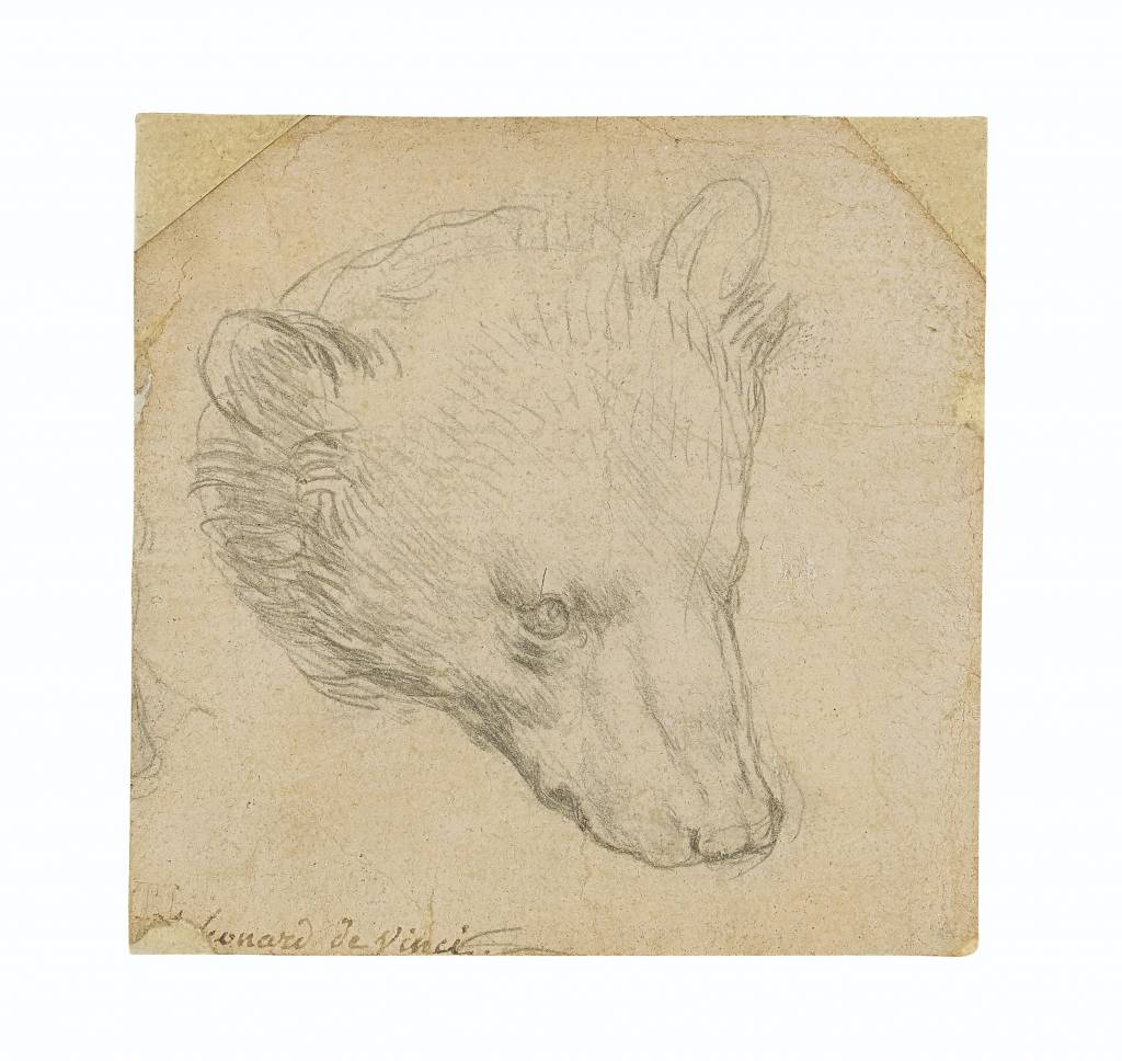 2021_CKS_19443_0020_000leonardo_da_vinci_head_of_a_bear040914.jpg