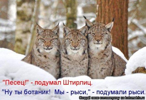 201508_kotomatrica-1.jpg
