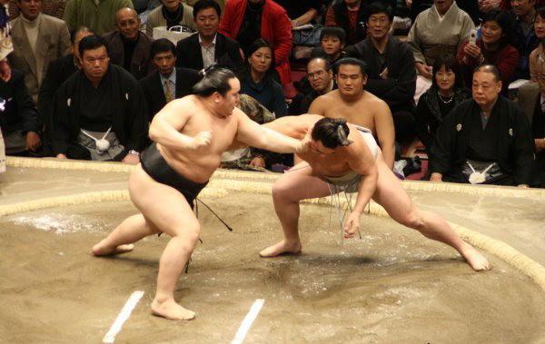 201511_sumo_9.jpg