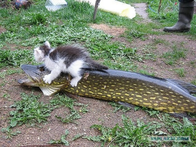 201807_cat_catch_1270195.jpg
