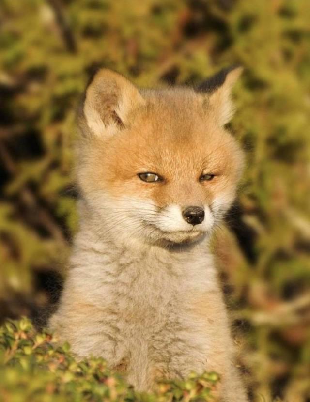 201811_fox.jpg
