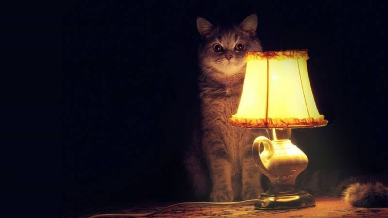 201903_cat.jpg