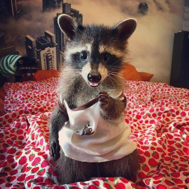 201904_raccoon_12923354.jpg