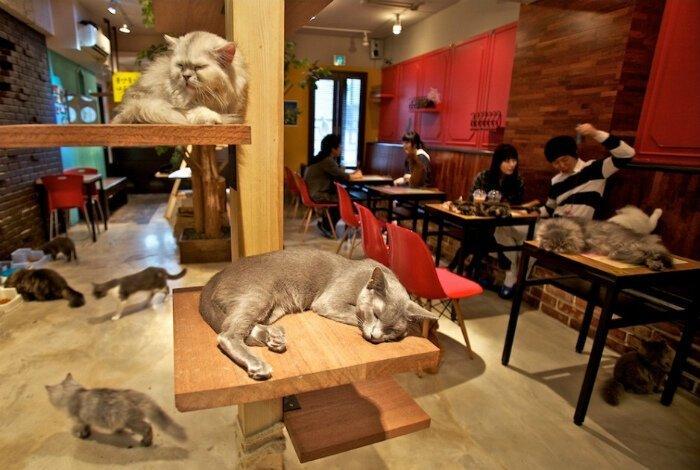 201905_cats_japan.jpg