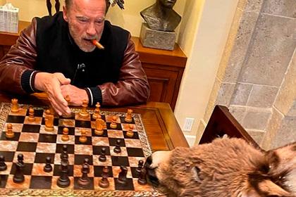 2020_arnold_chess.jpg
