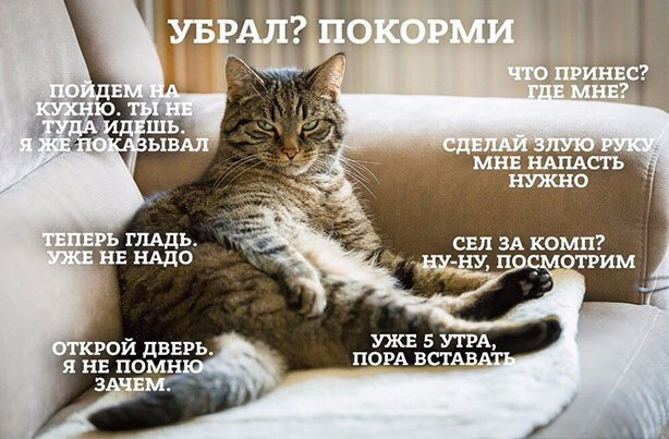 2020_cat_1-7.jpg
