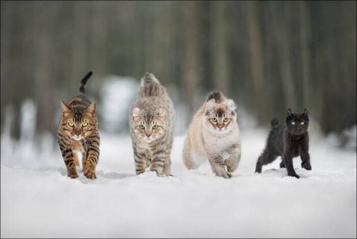 2020_cats_4.jpg