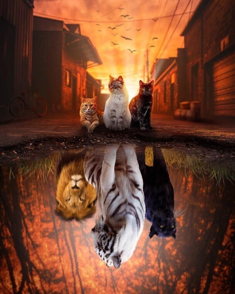 2021_cats_3.jpg