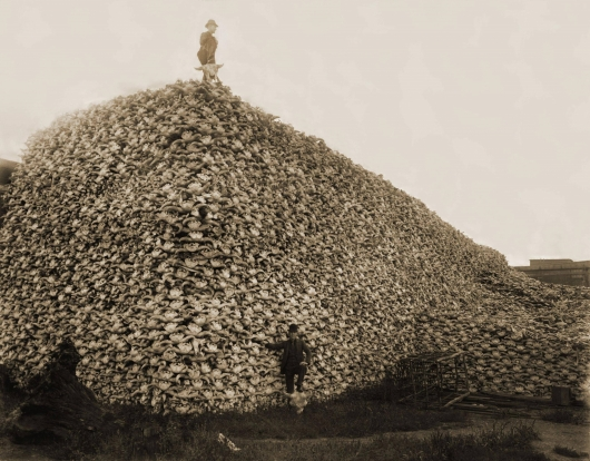 bison-skull-pile-c-1870.jpg
