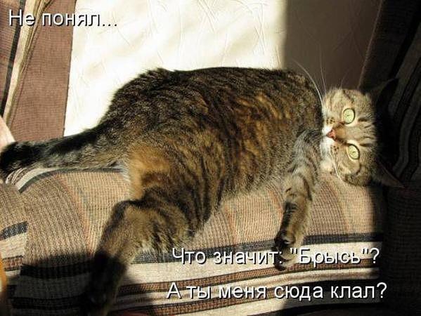 100192857_126.jpg